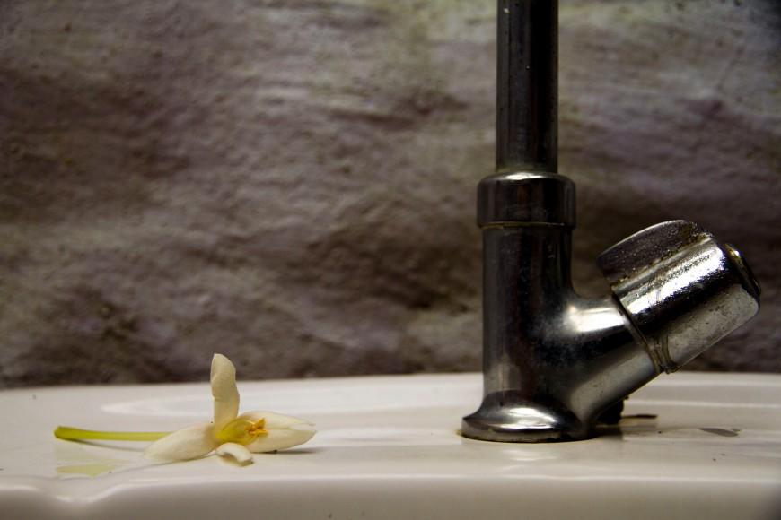 Flores en el baño